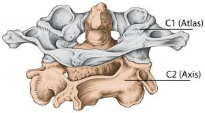 Άτλας σπόνδυλος - σπονδυλική στήλη ΑΜΣΣ